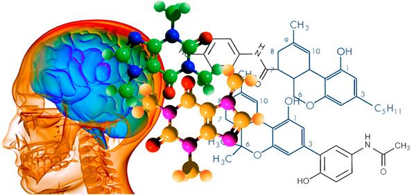 Descubre los ultimos avances sobre la quimica del cerebro